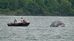 dead-humpback-whale.jpg
