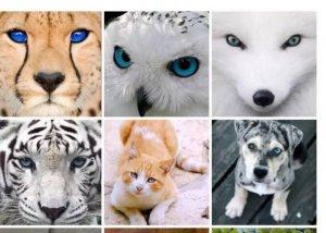 动物眼白.jpg