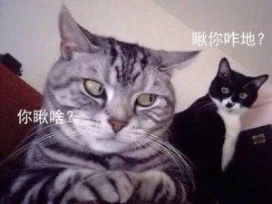 猫咪.jpeg