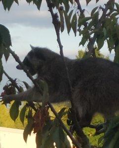 熊树.jpg