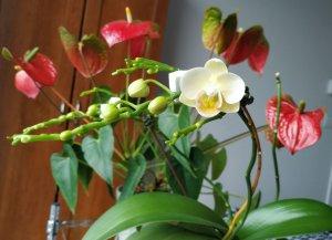 first-bloom.JPG